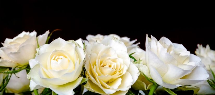roses-2198156__480